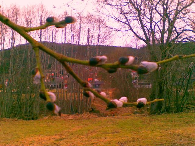 Like ved barnehagen hadde trea fått nydelege små gåsungar