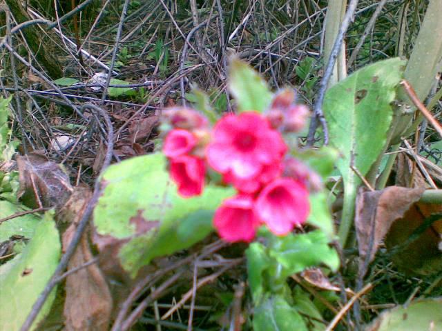 Vi er litt usikre på kva denne blomsten heiter... Nokon som kan hjelpe oss?