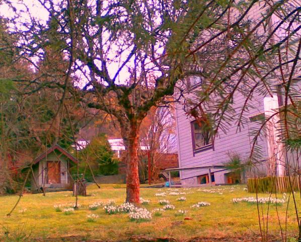 ...og hagen bak var full av snøklokker