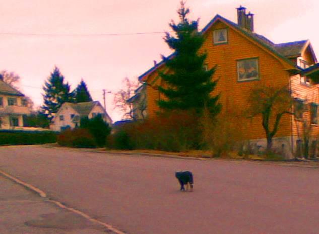 Ein katt ville òg vere med å leite. Han følgte etter oss langs heile Storgata